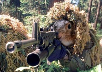 Sniper-Squirrel-30002